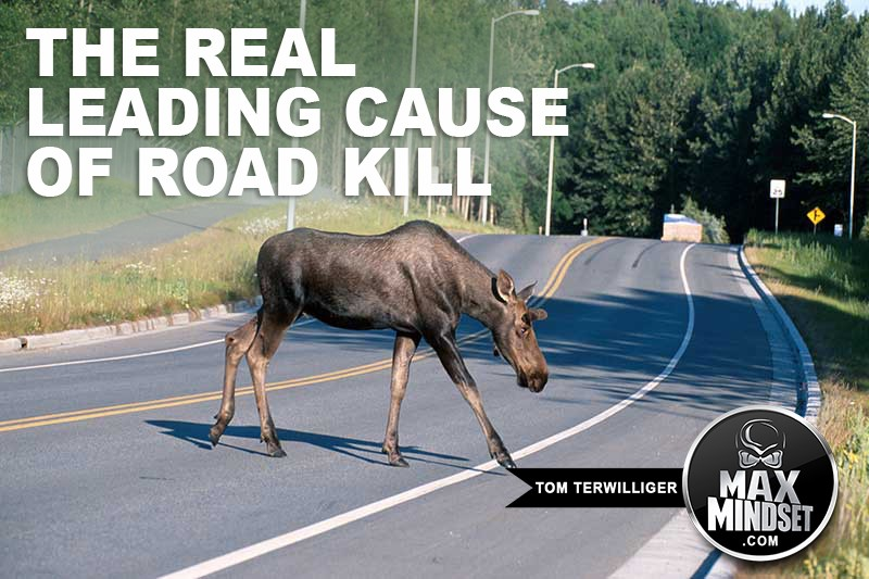 The REAL Leading Cause of Road Kill